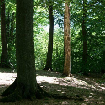 Sortie à Bokskogen, Torup: une forêt, un pique-nique et des moustiques