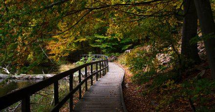 Rando à Söderåsen: un ravin, une forêt et de jolies couleurs d'automne