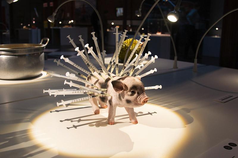 porc aux antibiotiques