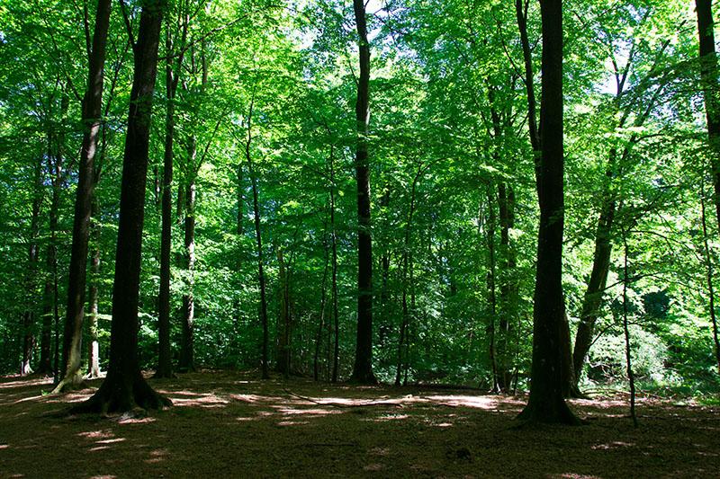bokskogen idee sortie foret malmo
