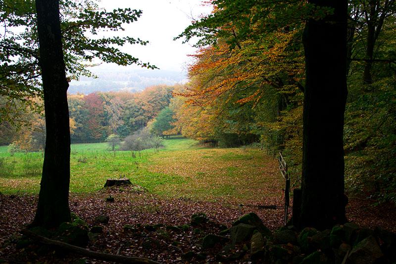 automne à söderåsen